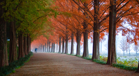 Thoughts on Autumn, Changing Seasons and E-Procurement