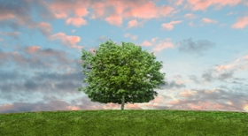 Celebrate Earth Day and Arbor Day by making your purchasing process paperless!